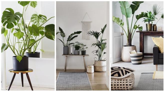 Plante en appartement décoration dintérieur pinterest