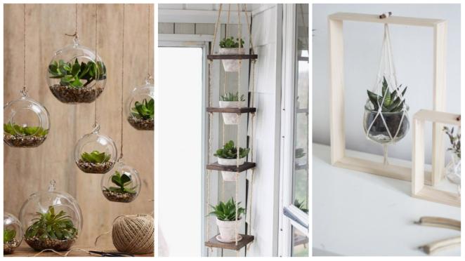 plante suspendue interieur terrarium decoration pinterest