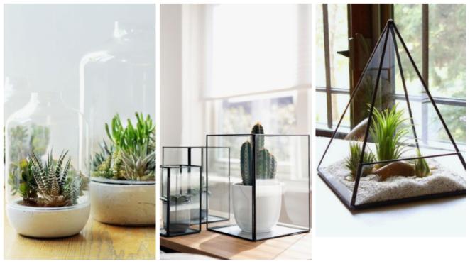 Terrarium inspiration décoration dinterieur plante pinterest